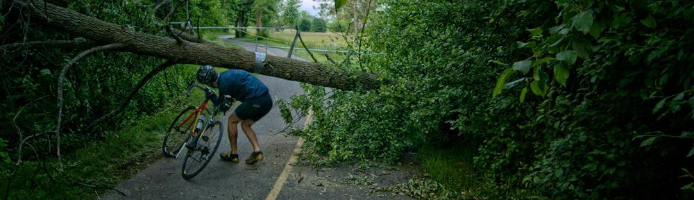 Fallen tree on bike path
