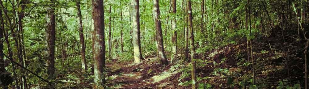 Forest path. Gatineau, Québec
