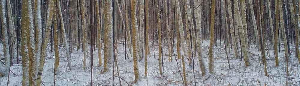 Forest Verge, Gatineau, Quebec