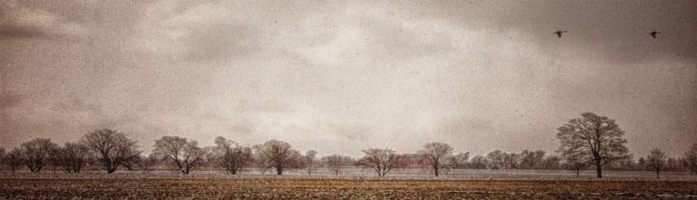 Winter, Central Experimental Farm, Ottawa, Ontario